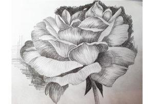 Draw a Flower
